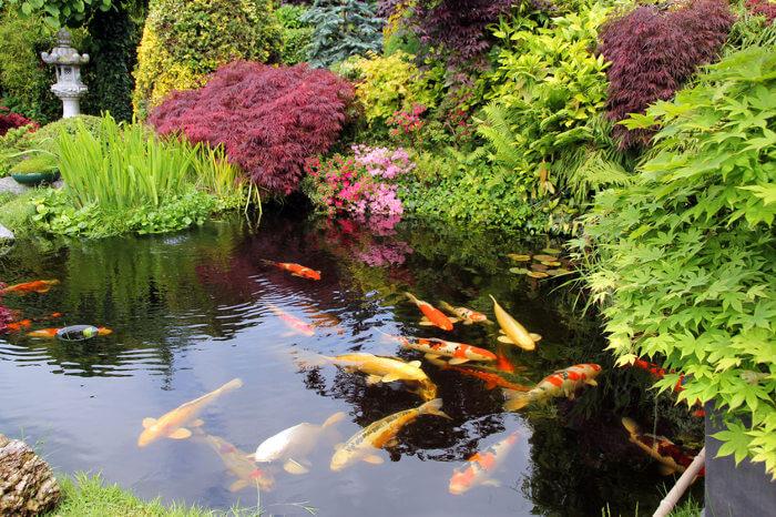 jaridn con estanque