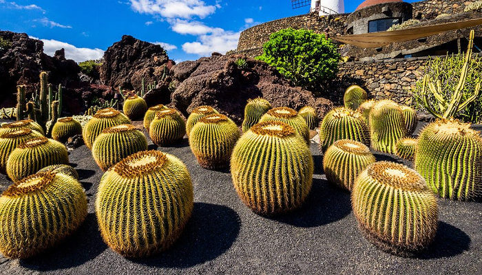 jardin con cactus