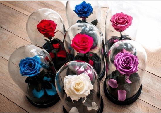 rosas-eternas