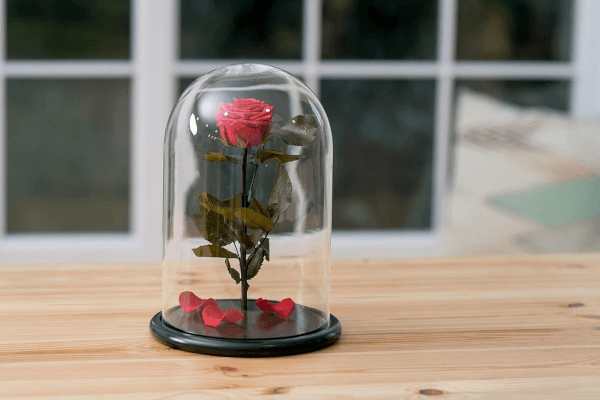 rosaseternas-cuanto-duran
